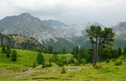 images/Fotos/Natur/Alpen/thumbs//Nationalpark_DSC0106.jpg