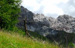 images/Fotos/Natur/Alpen/thumbs//Nationalpark_DSC0277.jpg