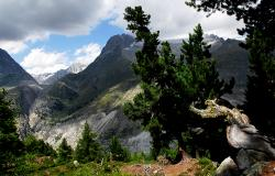 images/Fotos/Natur/Alpen/thumbs//farbspektrum-aletschregion.jpg