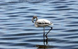 images/Fotos/Natur/Tierwelten/thumbs//Walvis-Bay-Flamengo-1.jpg