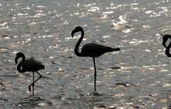 images/Fotos/Natur/Tierwelten/thumbs//Walvis-Bay-Flamengo.jpg