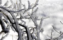 images/Fotos/Natur/Winter/thumbs//Baumschnee_farbspektrum.jpg