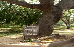 images/Fotos/Reisen/Kambodscha/thumbs//Phom-Penh-Killingfields-12.jpg